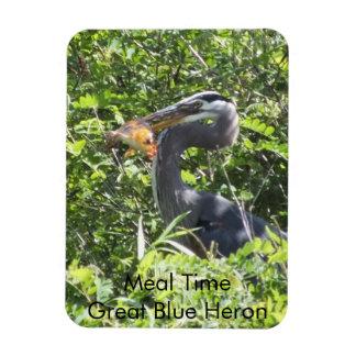 Garza de gran azul imán del tiempo de la comida