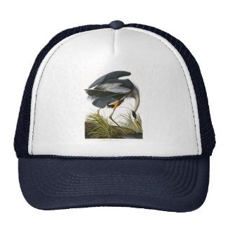 Garza de gran azul, John James Audubon Gorras