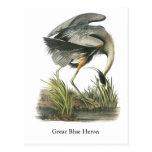 Garza de gran azul, Juan Audubon Tarjeta Postal