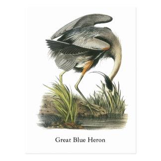 Garza de gran azul, Juan Audubon Postal