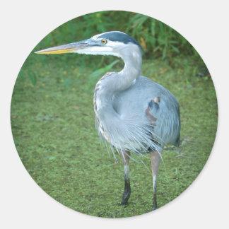 Garza de gran azul - pájaros de agua de la Florida Pegatina Redonda