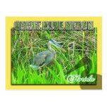 Garza de gran azul, parque nacional de los marisma tarjetas postales