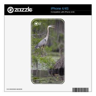 Garza de gran azul que llama el árbol de ciprés de calcomanías para iPhone 4