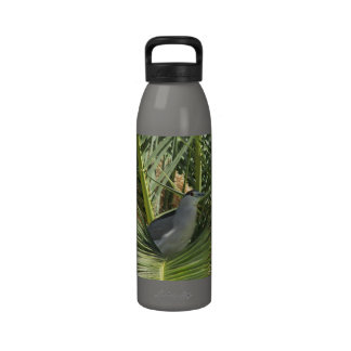 Garza de noche Negro-Coronada Botella De Agua