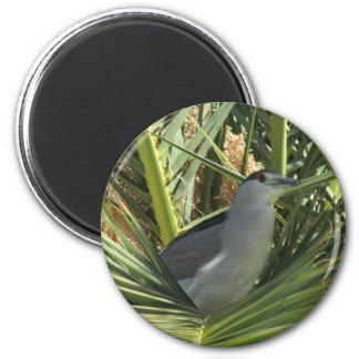 garza de noche Negro-coronada en un imán de la pal