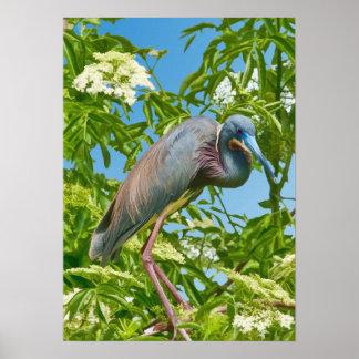 Garza de Tricolored en una impresión del árbol Impresiones