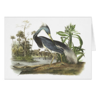 Garza de Tricolored por Audubon Tarjeta De Felicitación