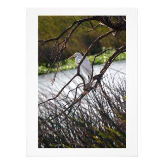 Garza en la foto del río San Joaquin