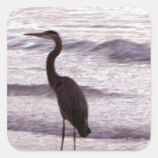 Garza en la playa - la Florida Pegatina Cuadrada