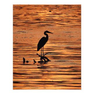 Garza en la puesta del sol arte fotografico