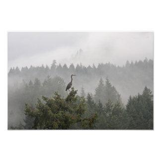 Garza en un paisaje de la montaña brumosa fotografías