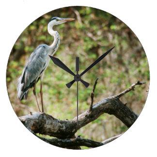 Garza gris (Ardea Cinerea), Suráfrica Relojes