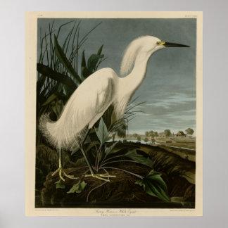 Garza nevada o Egret blanco Póster