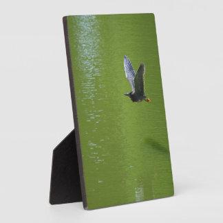 Garza verde en Mid Air Placa De Madera