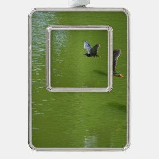 Garza verde en Mid Air