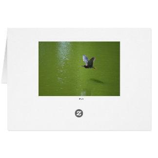 Garza verde en Mid Air Tarjeton