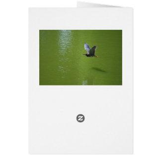 Garza verde en Mid Air Tarjeta