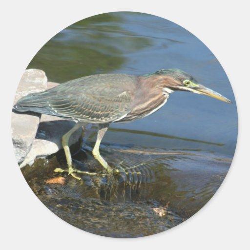 Garza verde que busca pescados etiqueta