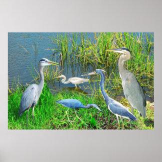 Garzas de los marismas parque nacional, la Florida Impresiones