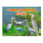 Garzas de los marismas parque nacional, la Florida Postal