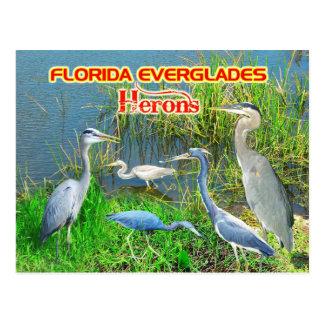Garzas de los marismas parque nacional, la Florida Postales