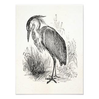 Garzas retras personalizadas pájaro de los pájaros fotografías