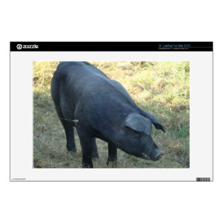 Gascon Pig Decals For Laptops
