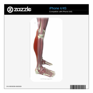 Gastrocnemius and Soleus Muscle Decal For iPhone 4S