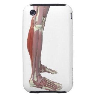 Gastrocnemius and Soleus Muscle iPhone 3 Tough Case