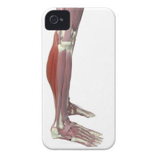 Gastrocnemius and Soleus Muscle iPhone 4 Cover