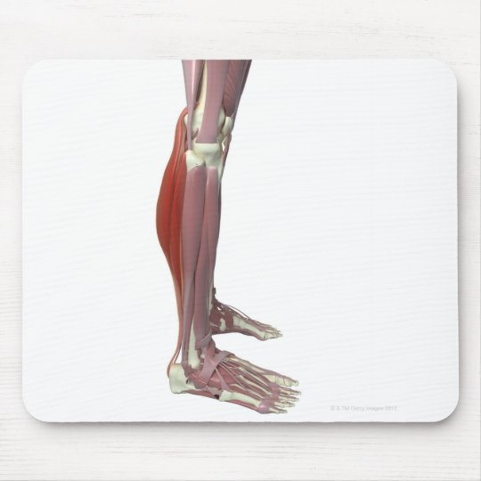 Gastrocnemius and Soleus Muscle Mouse Pad