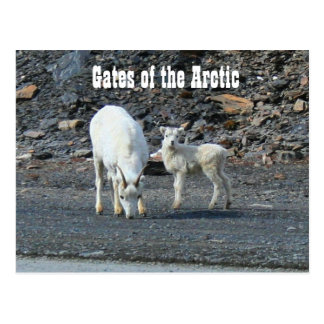 Gates of the Arctic Postcard Post Cards