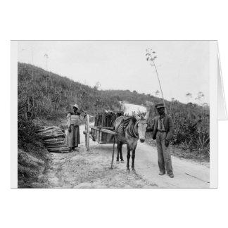 Gathering sisal, Nassau, Bahama Islands, c1900 Card
