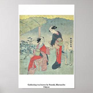Gathering tea leaves by Suzuki, Harunobu Ukiyoe Poster