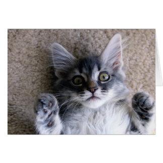 gatito 11348 que pone en en cámara de mirada trase tarjetón