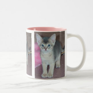 Gatito abisinio seis semanas de viejo taza de café