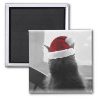 Gatito adorable del navidad imán cuadrado