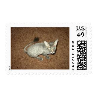 Gatito afeitado timbres postales