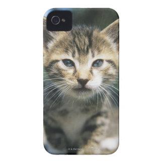 Gatito al aire libre Case-Mate iPhone 4 carcasas