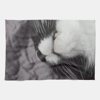 gatito al revés de la nariz del gato el dormir toallas de cocina