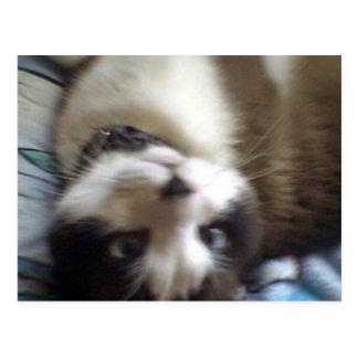 gatito al revés de la raqueta tarjeta postal