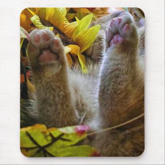 Gatito anaranjado del bebé, colores del otoño, gat tapetes de ratones