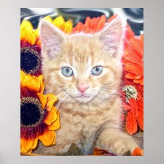 Gatito anaranjado del gato del gatito, ojos azules impresiones