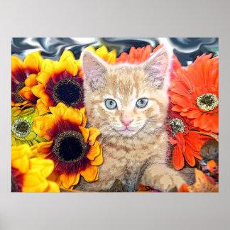 Gatito anaranjado del gato del gatito, ojos azules poster