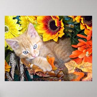 Gatito anaranjado del gato del gatito, ojos azules posters