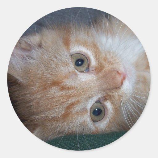 Gatito anaranjado del Tabby Pegatina