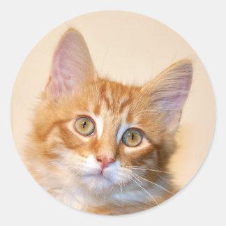 Gatito anaranjado del tabby pegatina redonda