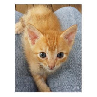 Gatito anaranjado del tabby postales
