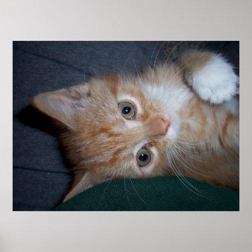 Gatito anaranjado del Tabby Póster