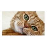 Gatito anaranjado grande plantilla de tarjeta personal